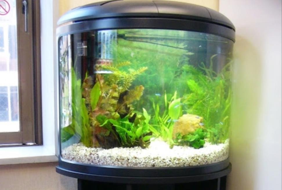 ホテルシエスタ様 半円柱型 淡水魚水槽 レンタル事例 メイン画像