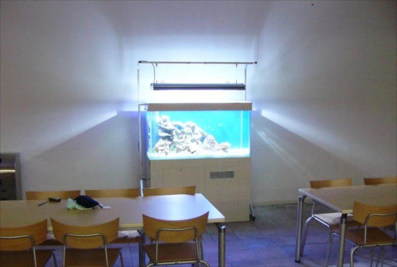 東京都豊島区 大正大学様  120cm海水魚水槽  設置事例 水槽画像2