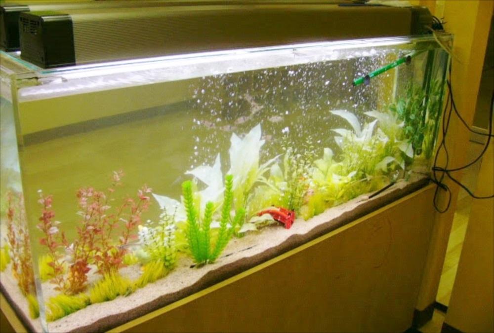 幼稚園 大型淡水魚水槽 生体画像