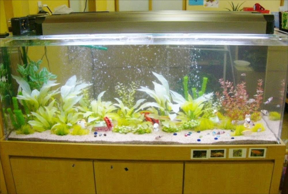 幼稚園 大型淡水魚水槽 全体画像