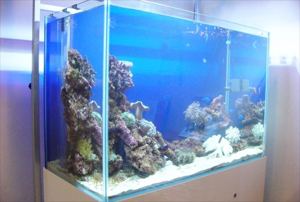 小児科 キッズルーム 海水魚水槽 アップ画像