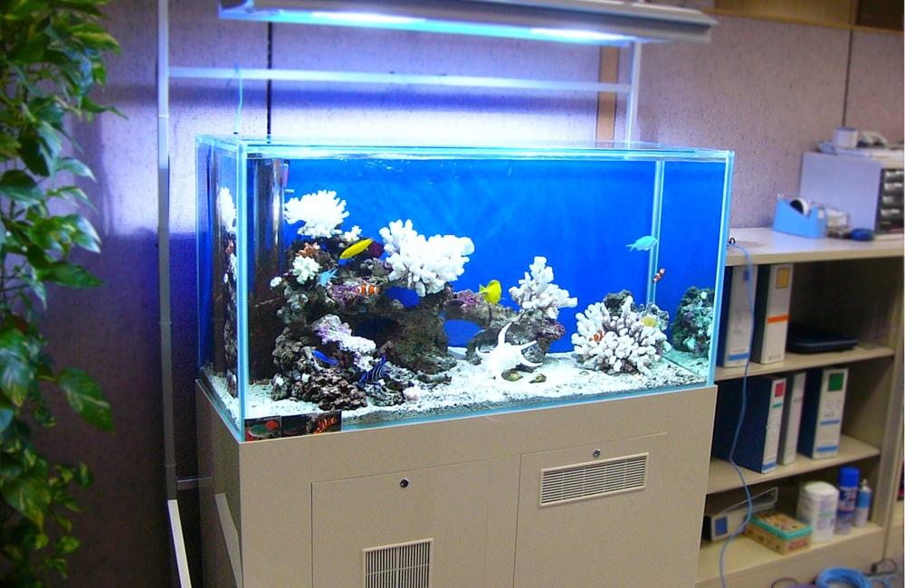 企業様のオフィスに120cm海水魚水槽を設置 水槽レンタル事例 メイン画像