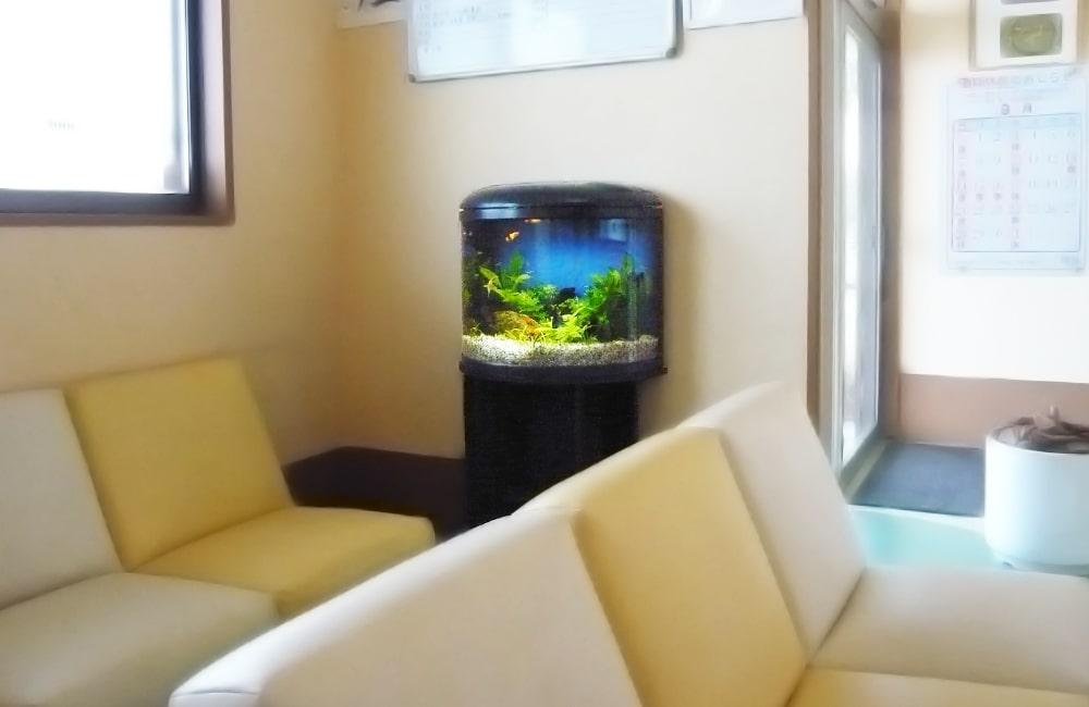 千葉県 病院様  60cm半円柱水槽 水槽レンタル事例 メイン画像