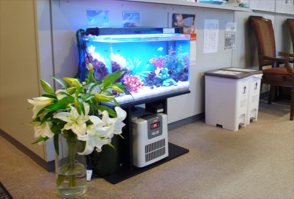 中野区 横内医院様 60cm海水魚水槽  設置事例 メイン画像