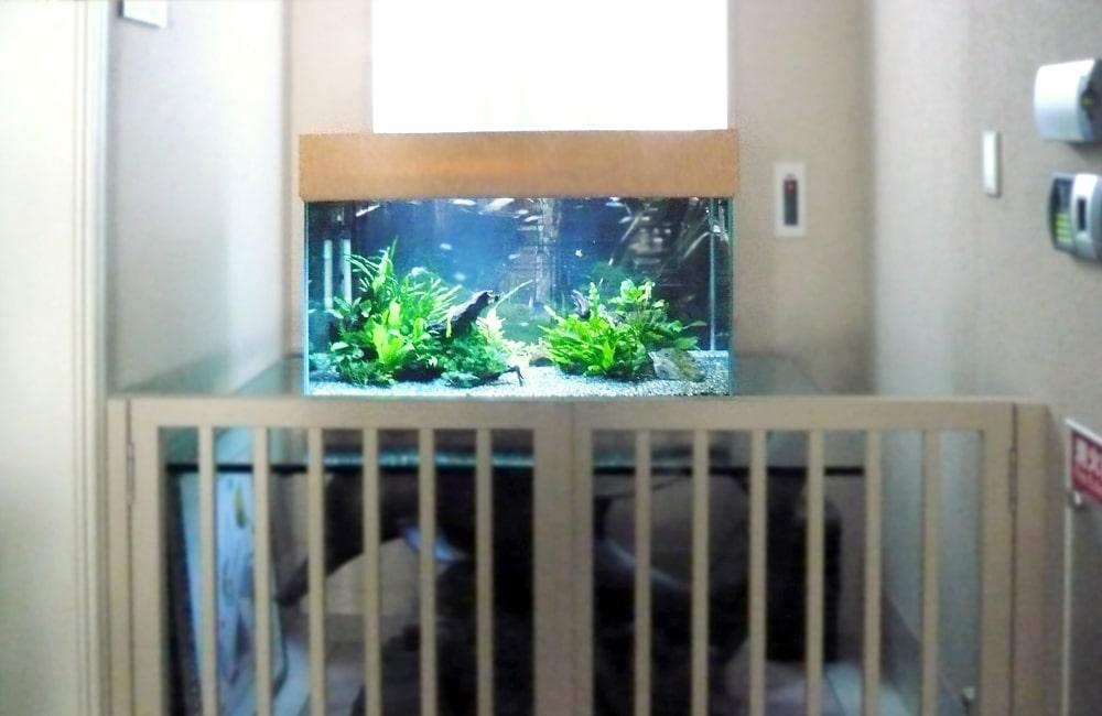 千葉県 婦人科医院様  90cm淡水魚水槽 水槽販売・メンテナンス事例 メイン画像