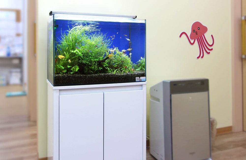 小児科 待合室 アクアリウム(淡水魚水槽)水槽レンタル事例 メイン画像