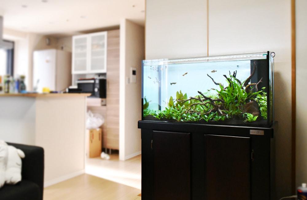 水槽レンタル事例 自宅 個人宅 水槽