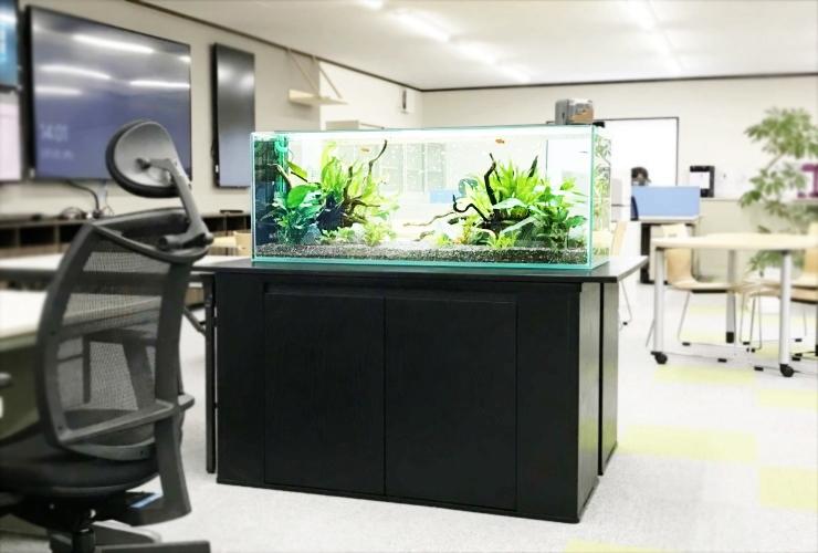 オフィス 新事務所内 120cm淡水魚水槽 設置事例 メイン画像