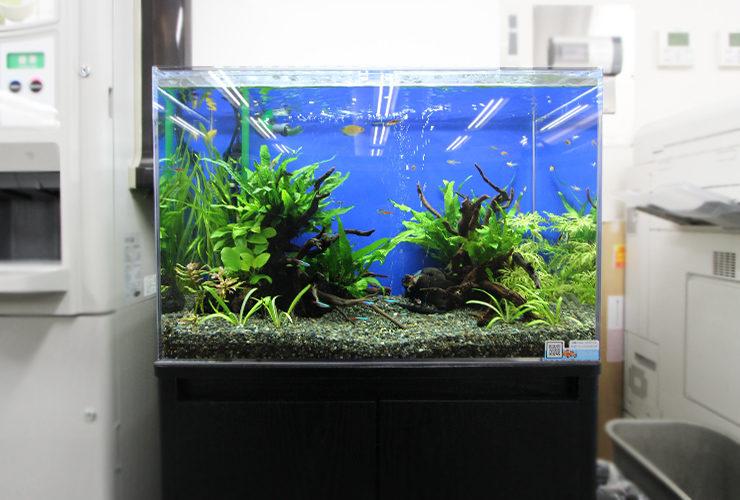 港区 オフィス 60cm淡水魚水槽 設置事例