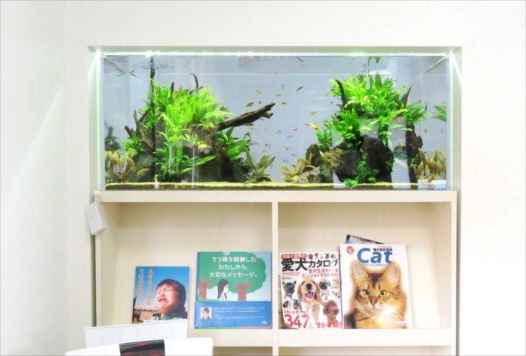 クリニックの待合室 壁埋め込み型 120cm淡水魚水槽 設置事例 その後 メイン画像