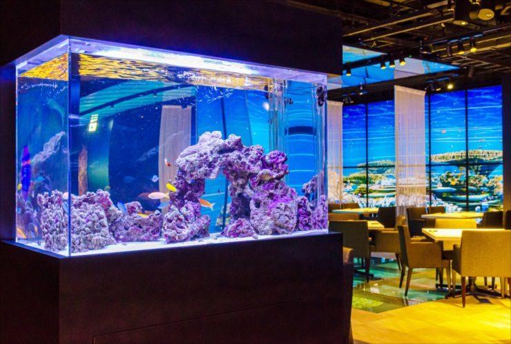 日本料理「魚月」様 90cm海水魚水槽 設置・メンテナンス事例
