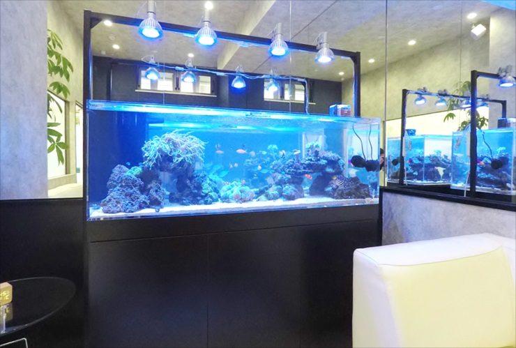 神奈川県 川崎市 オフィス 150cm海水魚水槽 設置事例 その後