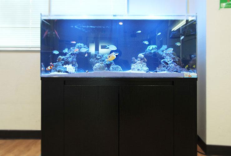 千葉県船橋市 オフィス 120cm海水魚水槽のその後 メイン画像