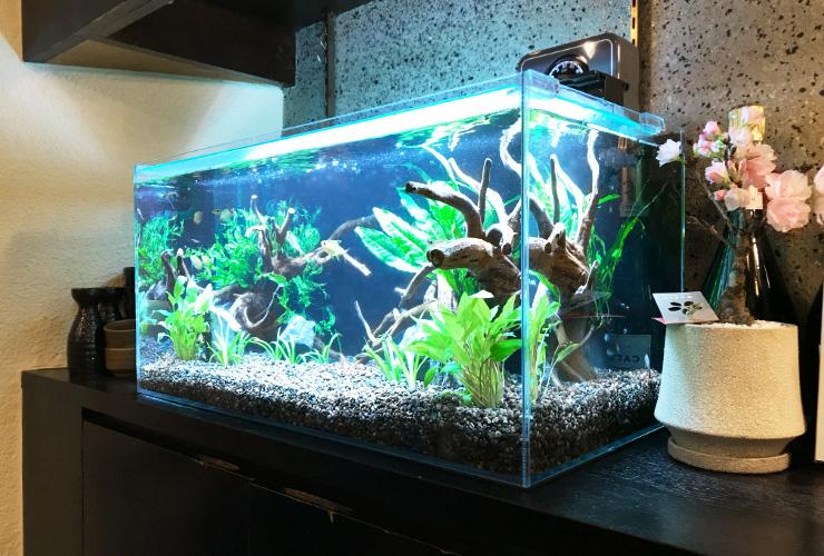 大阪市 飲食店(バー)の店内 60cm淡水魚水槽 設置事例 メイン画像