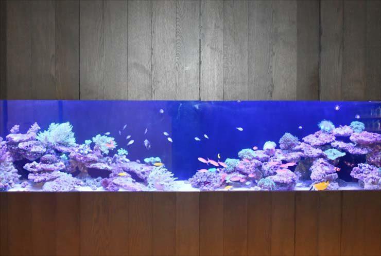 中央区 日本橋 オフィス 大型サンゴ水槽 販売・設置事例 水槽画像2