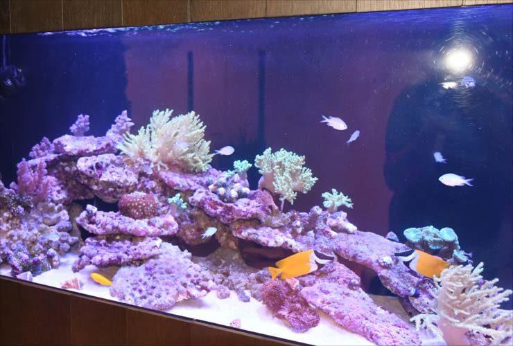 中央区 日本橋 オフィス 大型サンゴ水槽 販売・設置事例 水槽画像3