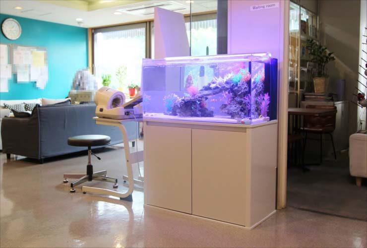 昭島市 クリニック 待合室 90cm海水魚水槽 設置事例 メイン画像