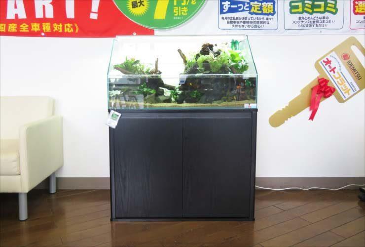 ガソリンスタンド 店舗に設置 90cmテラリウム水槽 設置事例 水槽画像2