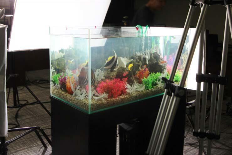 短期イベント 水槽撮影 90cm海水アクアリウム 設置事例 水槽画像1