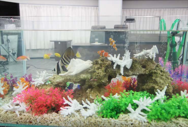 短期イベント 水槽撮影 90cm海水アクアリウム 設置事例 水槽画像2