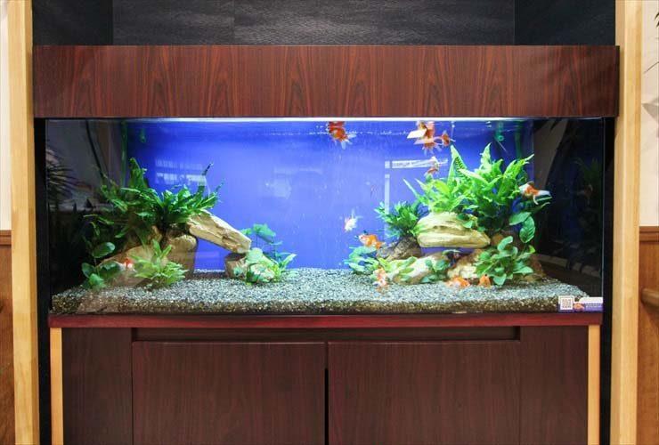 大人気!金魚水槽の設置事例をご紹介します 水槽画像2