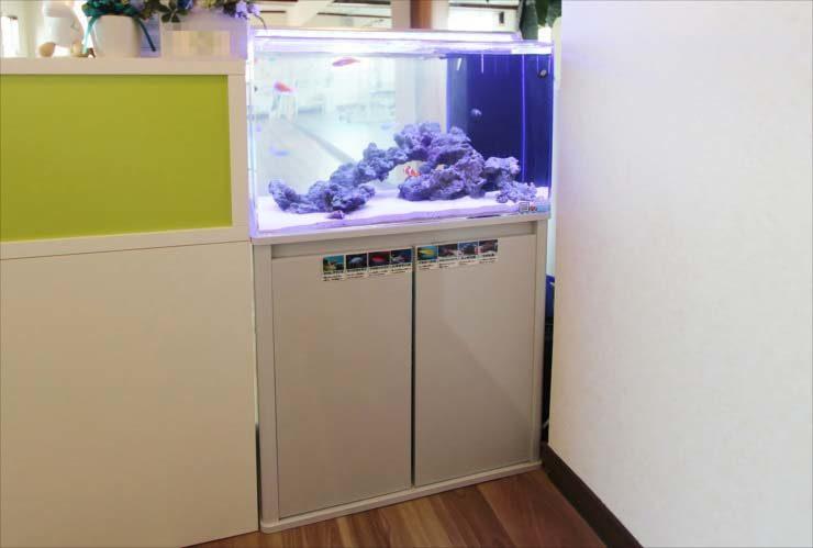 埼玉県 戸田市 スポーツジムに設置 60cm海水魚水槽 導入事例 メイン画像
