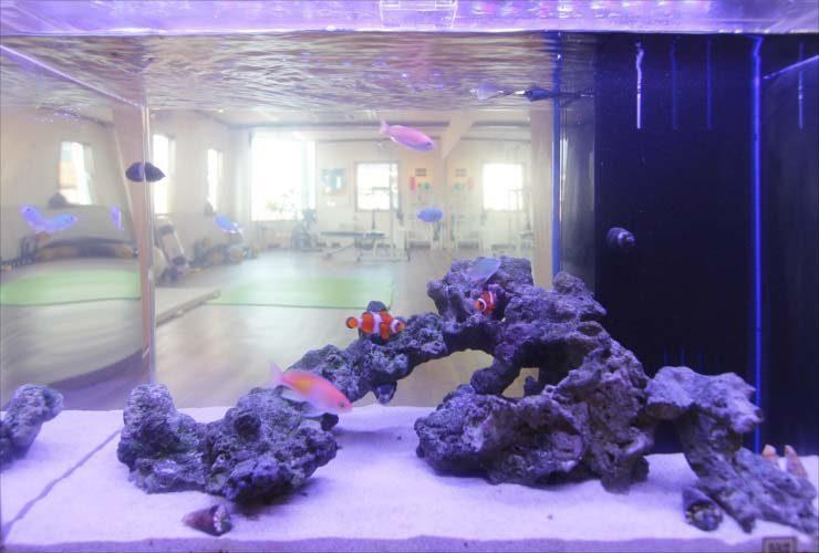 埼玉県 戸田市 スポーツジムに設置 60cm海水魚水槽 導入事例 水槽画像2
