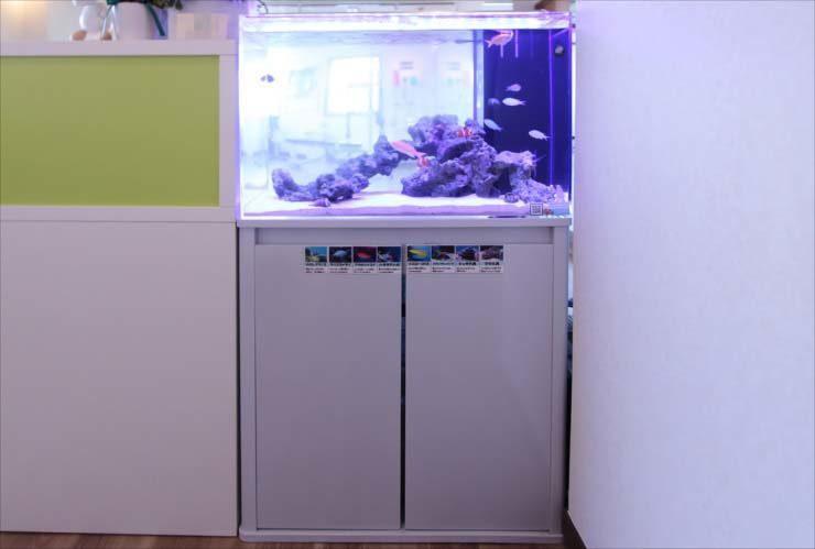 埼玉県 戸田市 スポーツジムに設置 60cm海水魚水槽 導入事例 水槽画像3