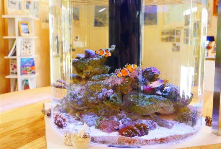 喜界島 研究所に設置 オーダーメイド水槽の事例をご紹介 メイン画像