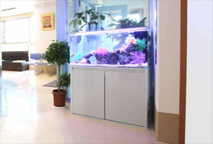 クリニックに設置 90cm海水魚水槽写真3