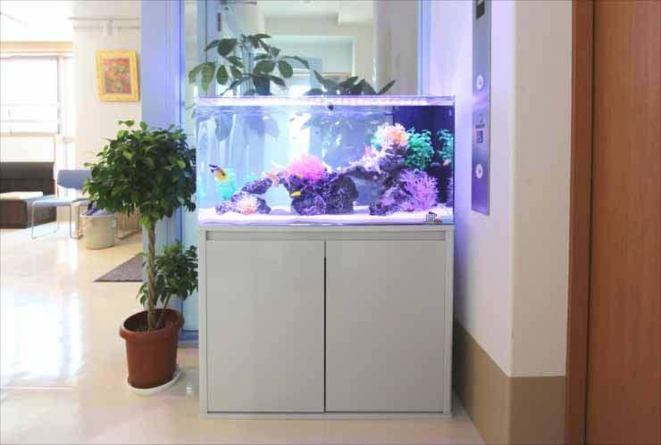 クリニックに設置 90cm海水魚水槽写真4