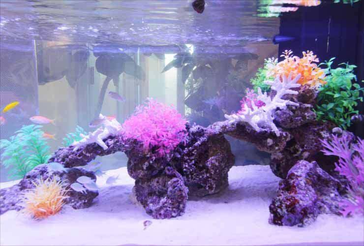クリニックに設置 90cm海水魚水槽写真5