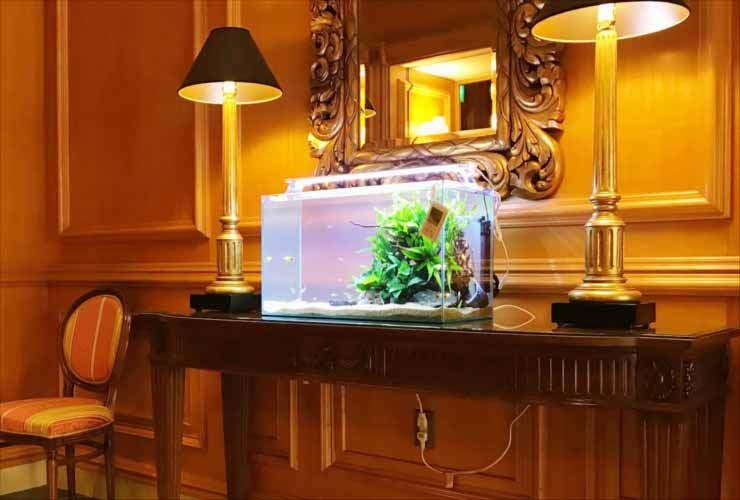 ホテルに設置 60cm淡水魚水槽2台 短期レンタル事例 メイン画像