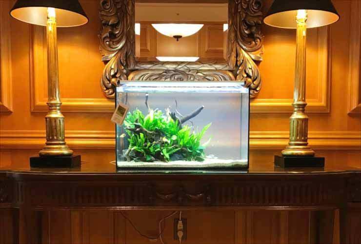 ホテルに設置 60cm淡水魚水槽2台 短期レンタル事例 水槽画像2