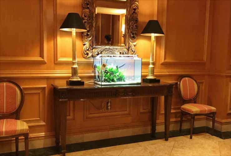 ホテルに設置 60cm淡水魚水槽2台 短期レンタル事例 水槽画像3