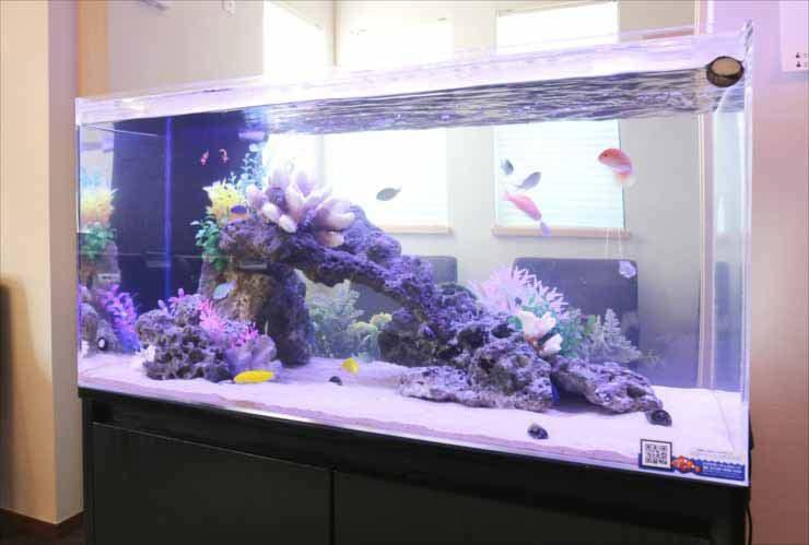神奈川県川崎市 オフィスに設置 両面仕様 90cm海水魚水槽事例 水槽画像1