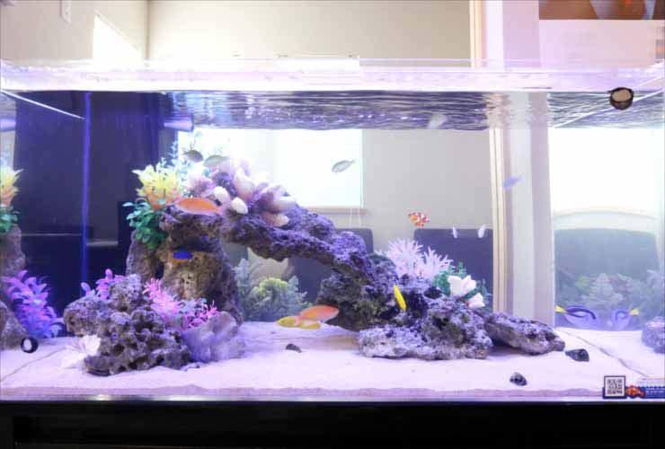 神奈川県川崎市 オフィスに設置 両面仕様 90cm海水魚水槽事例 水槽画像2