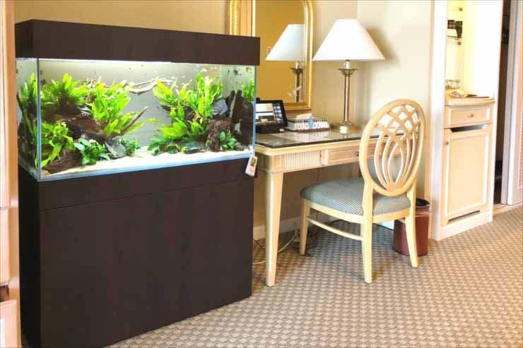 ホテルの客室 90cm淡水魚水槽 短期レンタル 設置事例 メイン画像