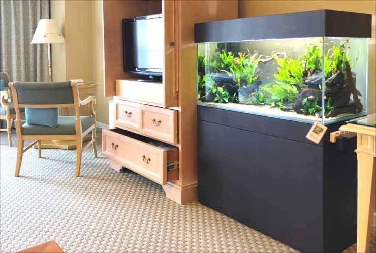 ホテルの客室 90cm淡水魚水槽 短期レンタル 設置事例 水槽画像3