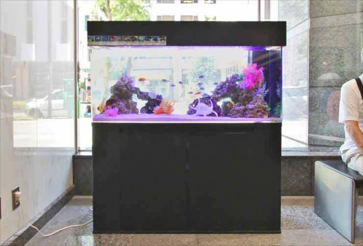 オフィスビル 短期イベント 120cm海水魚水槽 設置事例 水槽画像1