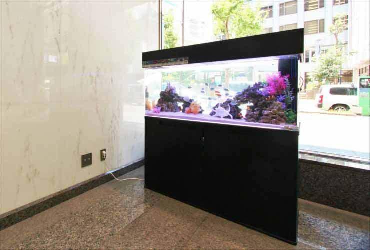 オフィスビル 短期イベント 120cm海水魚水槽 設置事例 水槽画像2