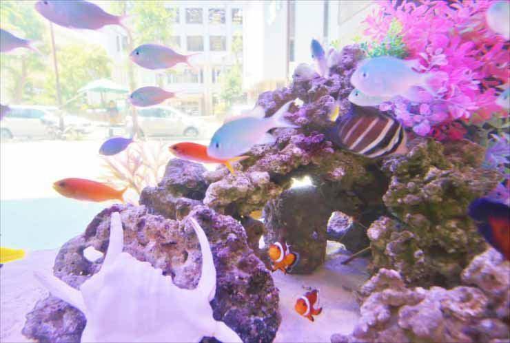 オフィスビル 短期イベント 120cm海水魚水槽 設置事例 水槽画像3