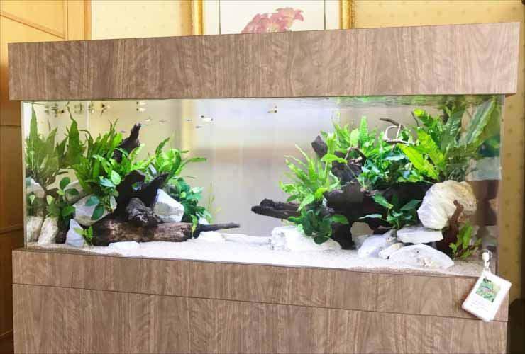 ホテル 客室 短期イベント 120cm淡水魚水槽 レンタル事例 メイン画像