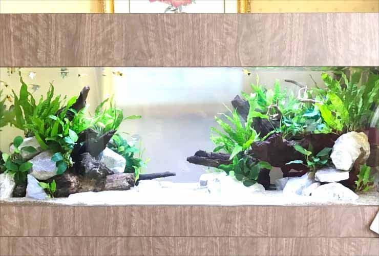 ホテル 客室 短期イベント 120cm淡水魚水槽 レンタル事例 水槽画像3
