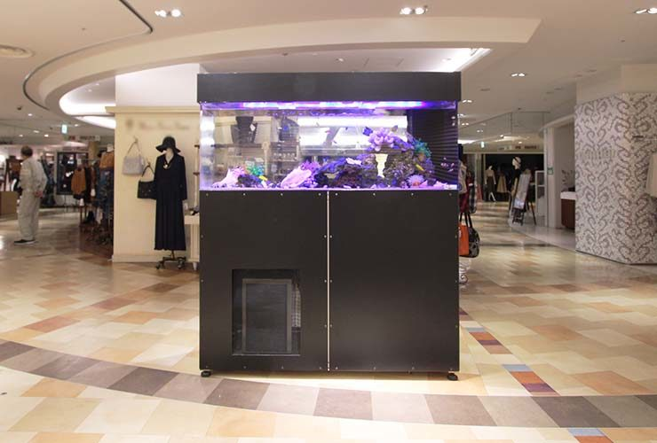 大田区 百貨店イベント 150cm海水魚水槽 短期レンタル事例 水槽画像2