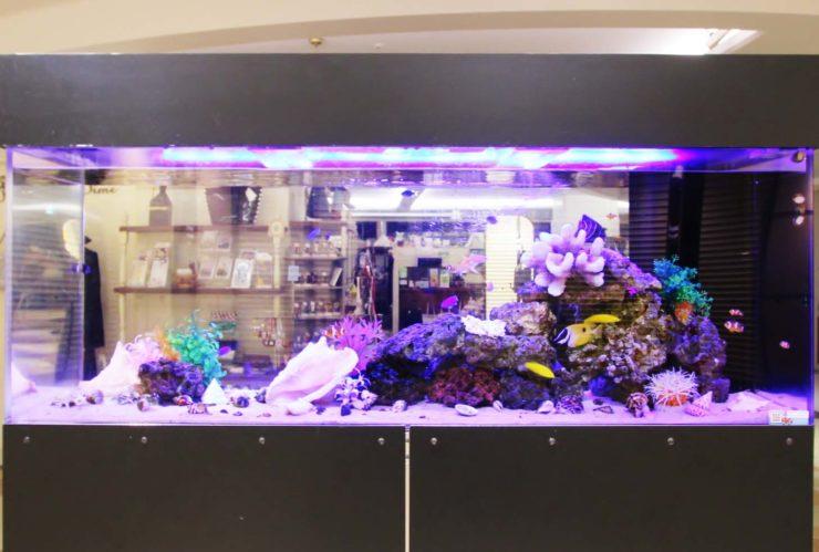 大田区 百貨店イベント 150cm海水魚水槽 短期レンタル事例 水槽画像3
