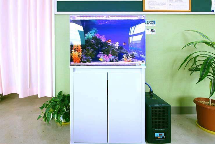 埼玉県 草加市 整形外科の待合室 60cm海水魚水槽 設置事例 メイン画像