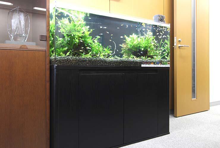 港区 オフィス 応接室に設置 120cm淡水魚水槽 水草レイアウト事例 メイン画像