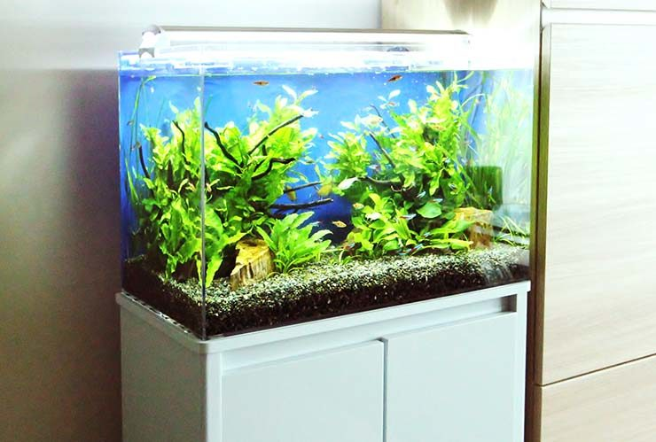 墨田区 個人宅 リビング 60cm淡水魚水槽レンタル・メンテナンス事例 メイン画像