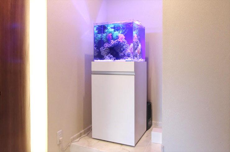 おしゃれでかわいい! キューブ水槽の設置事例をご紹介します 水槽画像2